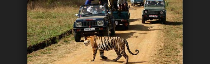 BANDHAVGARH - NATIONAL - PARK