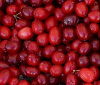 Craneberries Fruit